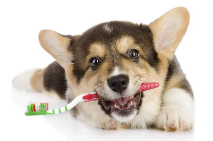 Petplan and The Warehouse cover dental damage caused by accident as well as tooth decay, provided your pet has had a check-up in the past 12 months.