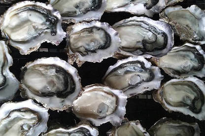 17feb hutchings addison oysters med