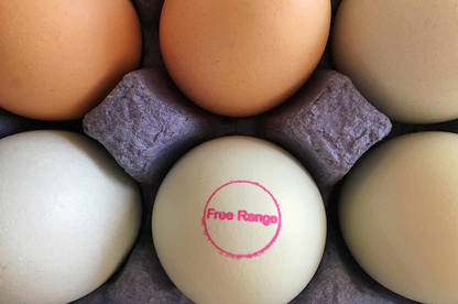 16jun free range eggs stamp med