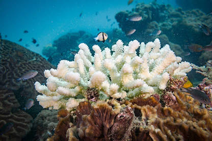 Studies have shown some chemical blockers are toxic to coral and potentially harmful to other aquatic organisms.