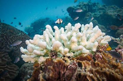 18nov coral
