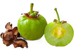 18jan garcinia fruit body