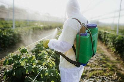 20feb pesticides in fruit and vege body1