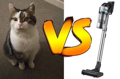An images showing my cat, Jedi, and the Samsung Jet 90 Pet stick vac.