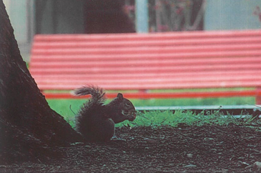 Photo of a squirrel, printed with the Lifeprint.