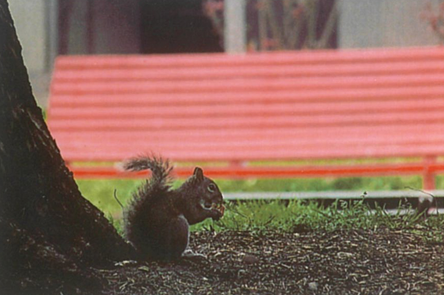Photo of squirrel, printed with the HP Sprocket.