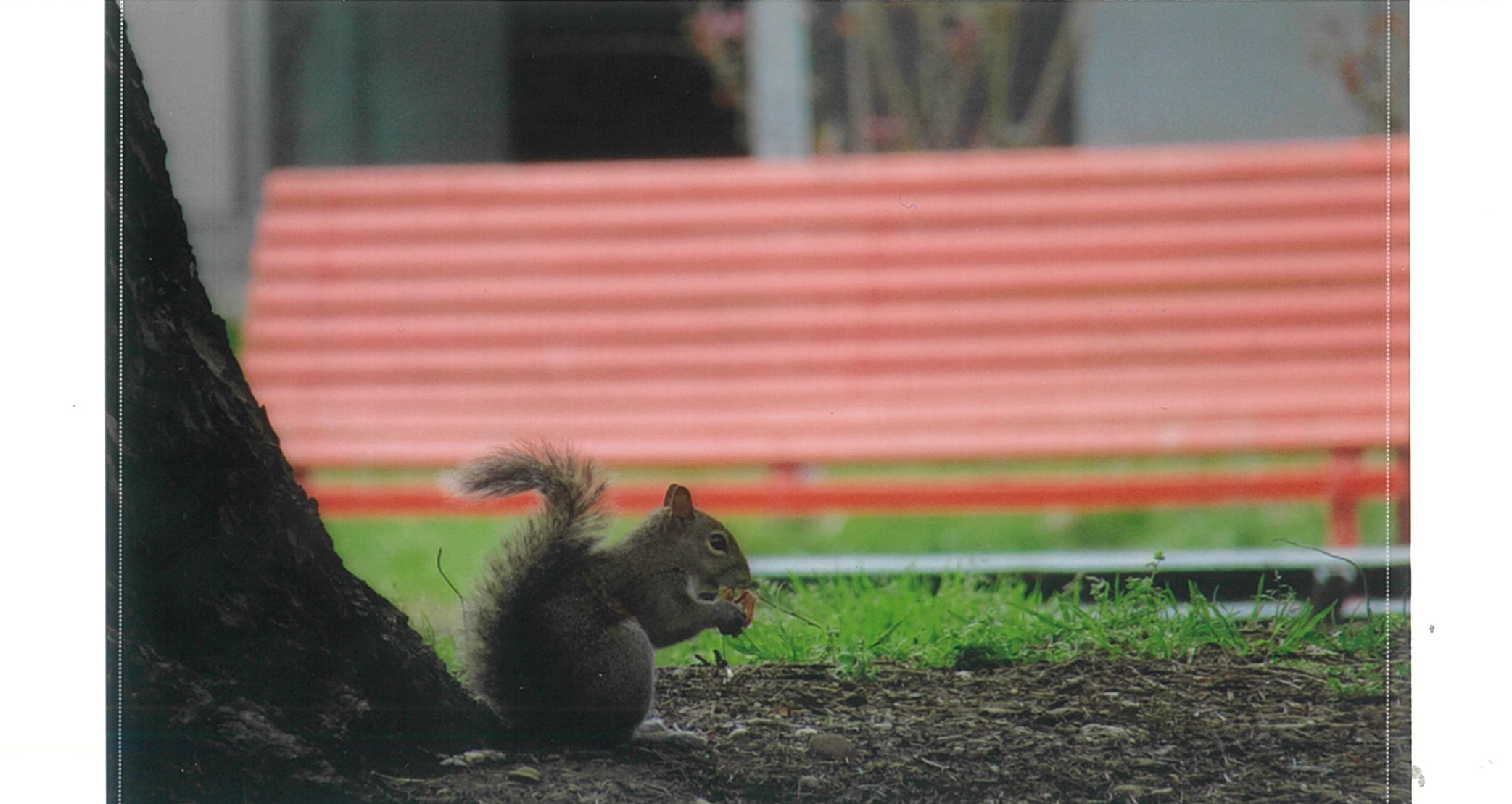 Photo of squirrel, printed with the Canon Selphy CP1300.