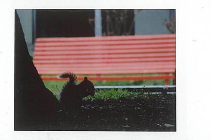 Photo of squirrel, printed with the Fujifilm Instax Mini Link.