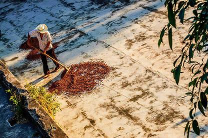 20nov ethical cocoa farmer