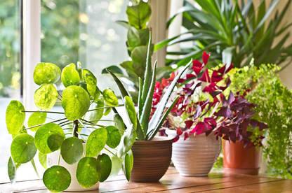 21jan house plants body