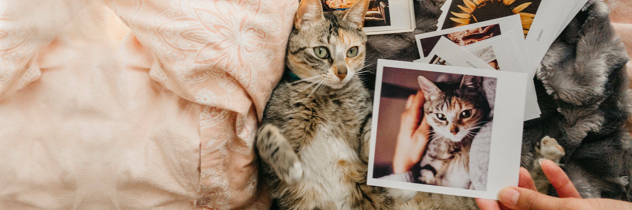 Cat lying down in bed with several retro photos.