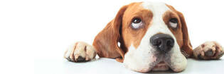 """""""Bacon"""" claim removed from Vitapet treats"""