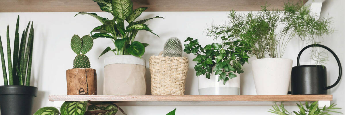 21jan house plants hero
