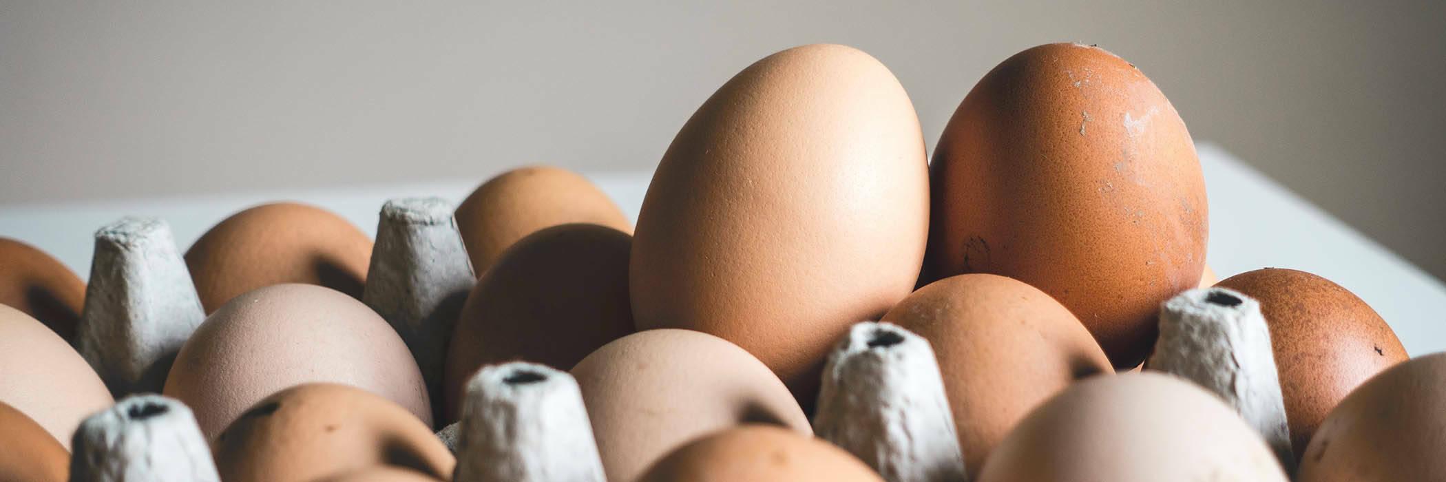Salmonella eggs hero