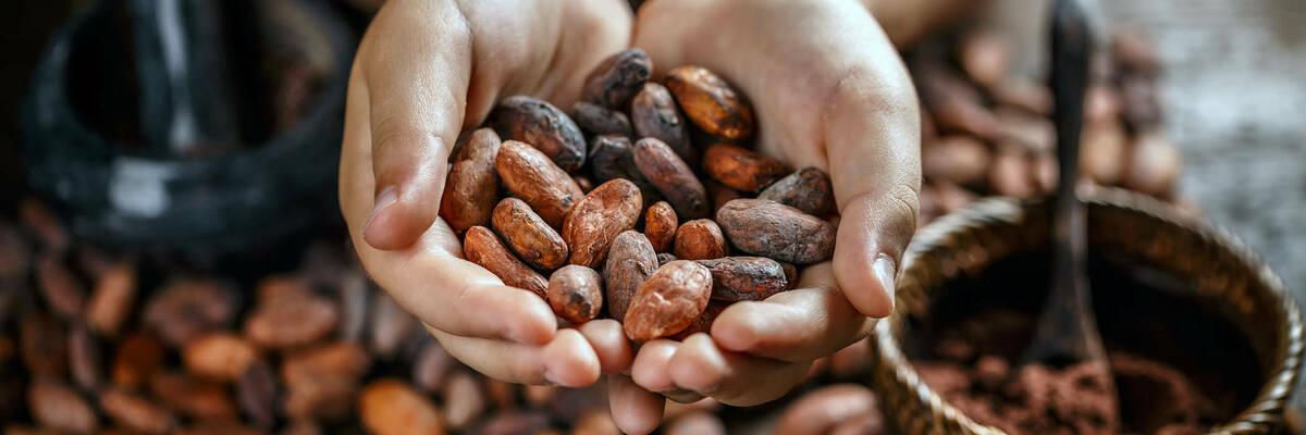 20nov ethical cocoa hero