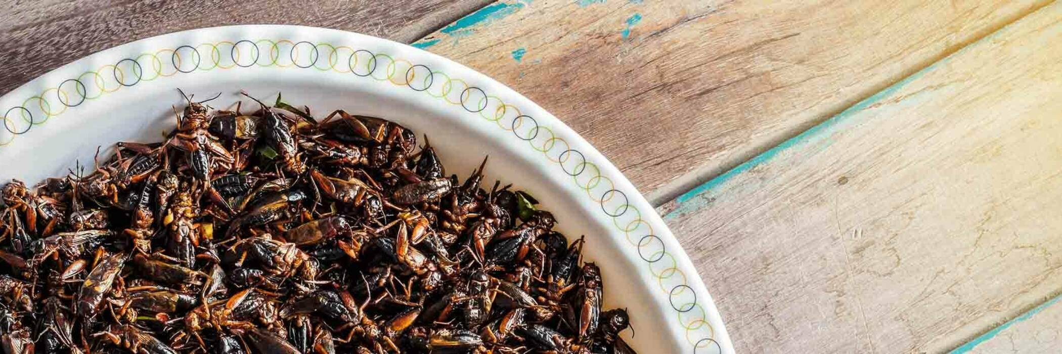 Plate of insects as alternative protein.
