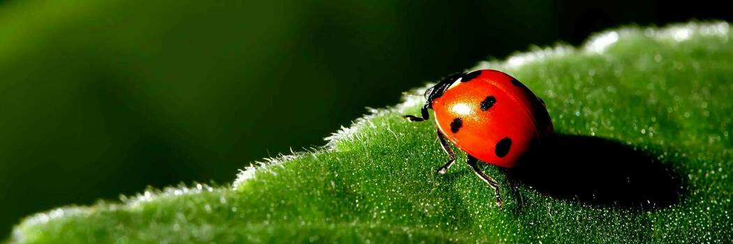 Gardening without insecticides - Consumer NZ