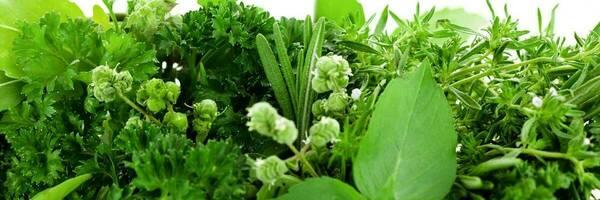 Growing herbs - Consumer NZ