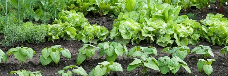 11jan growingvegetables hero
