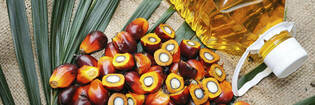 16mar palm oil hero
