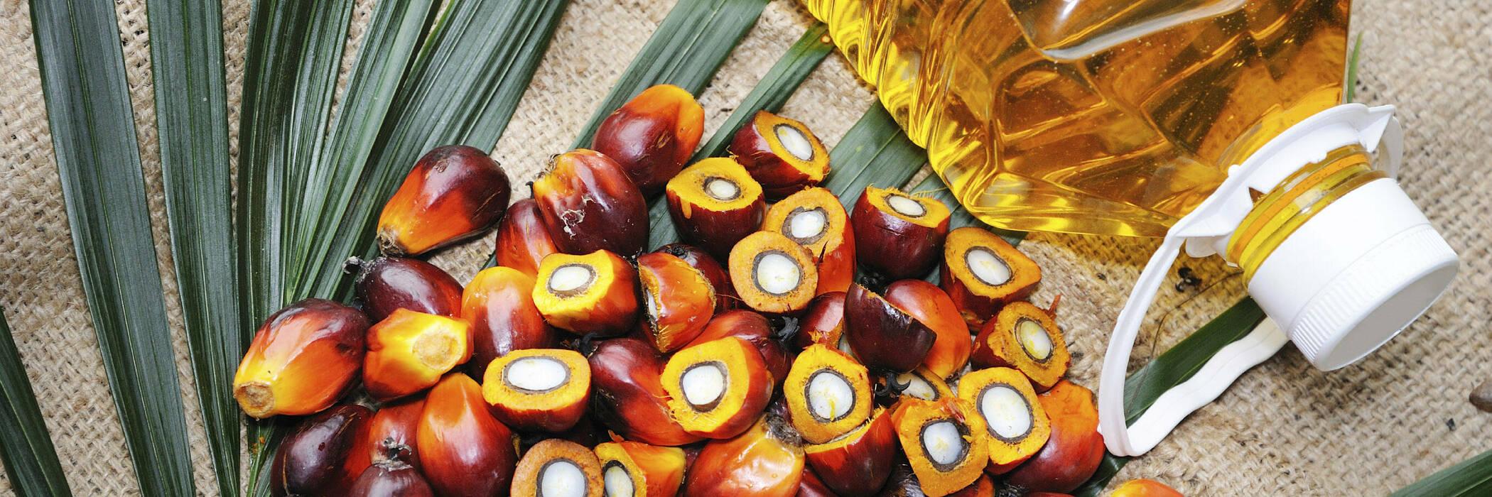 16mar palm oil hero