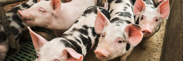 Pigcare label risked misleading consumers