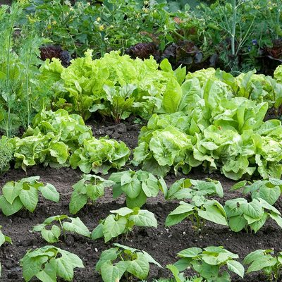 Growing Vegetables Consumer Nz