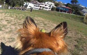 15apr action cam dog default