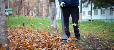 Cleaning leaves with a leaf blower.