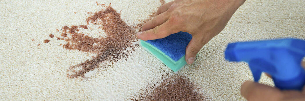 Carpet cleaners reviews ratings consumer nz 16oct carpet cleaners hero default solutioingenieria Image collections