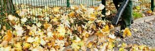 14sep leaf blower vac hero